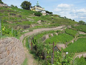 Radebeul - Vineyards of Radebeul