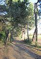 Railway Walk Jersey 04.jpg