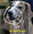 Ramanathapuram mandai dog identity without black mask in snout area.png