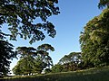 Rectory Field, East Ogwell - geograph.org.uk - 874294.jpg