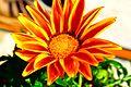 Redflower12313.jpg