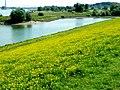 Rheinwiesen zwischen Homberg und Rheinhausen - panoramio.jpg