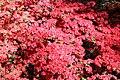 Rhododendronpark Bremen 20090513 244.JPG