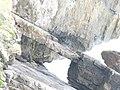 Rock Slab, Newton Cliff - geograph.org.uk - 1480657.jpg