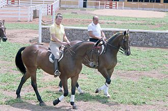 João Figueiredo - Figueiredo and U.S. President Ronald Reagan riding horses in Brasília, December 1, 1982.
