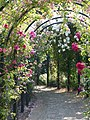 Rose Arch Pergola at Gardens of the Rose, RNRS.JPG