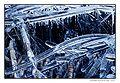 Roseaux dans la glace.jpg