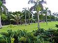 Royal Palm Trees in Daan Park East Part.jpg