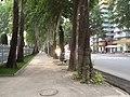 Rudaki Avenue sidewalk, Dushanbe 01.jpg
