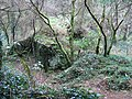 Ruined Cottage in Pentraeth Forest. - geograph.org.uk - 322448.jpg
