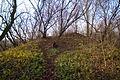 Ruiny dworu obronnego w Miedznej 04.jpg