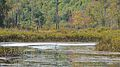 Ruisseau du Lac à la Loutre - Gatineau Park, Quebec 01.jpg