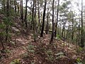 Rumbalara Reserve - panoramio (6).jpg
