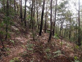 Gosford - Rumbalara Reserve Gosford