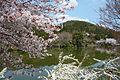 Ryoanji Kyoto04-r.jpg