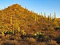 Saguaro National Park (West) 5.jpg