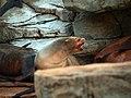 Saint Louis Zoo 044.jpg