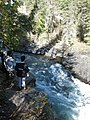 Salmon run at Adams River 2010 (5074058007).jpg