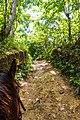 Samaná Province, Dominican Republic - panoramio (158).jpg