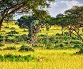 Savannah, Uganda (15687206021).jpg