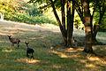 Schlangenbad am morgen 09.09.2012 07-49-12.jpg