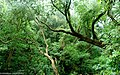 Selva montana de las Yungas en Catamarca, Argentina.jpg