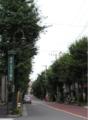 Senzoku Namiki.png