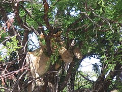 Serengeti National Park-108489.jpg