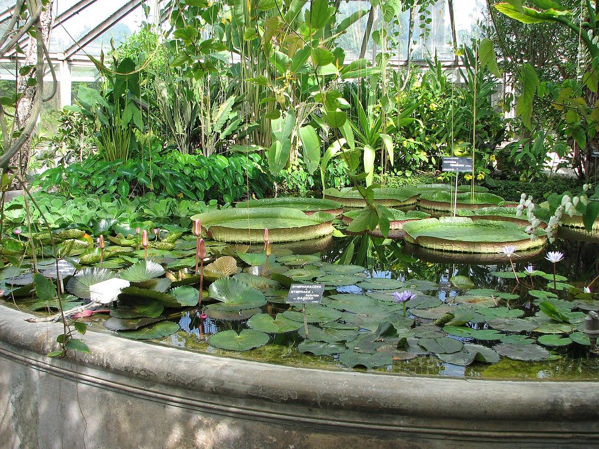 Jardin botanique de lyon wikidata - Jardin villemanzy lyon lyon ...