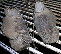 Shearers moccasins.JPG