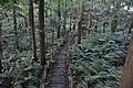 Shinbayashi Park - trail.jpg