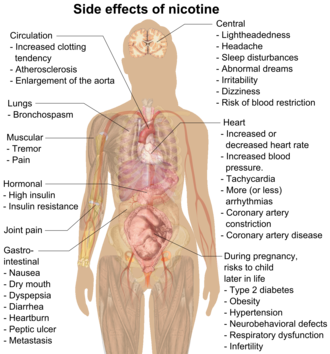 Possible side effects of nicotine include increased clotting tendency, atherosclerosis, enlargement of the aorta, bronchospasm, muscular tremor and pain, gastrointestinal nausea, dry mouth, dyspepsia, diarrhea, heartburn, peptic ulcer, cancer, lightheadedness, headache, sleep disturbances, abnormal dreams, irritability, dizziness, blood restriction, increased or decreased heart rate, increased blood pressure, tachycardia, more (or less) arrhythmias, coronary artery constriction, coronary artery disease, high insulin, insulin resistance, and risks to child later in life during pregnancy include type 2 diabetes, obesity, hypertension, neurobehavioral defects, respiratory dysfunction, and infertility.