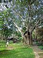 Sigiriya Village (3).jpg