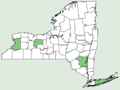Sisymbrium loeselii NY-dist-map.png