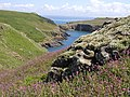 Skomer Island looking towards the Neck - geograph.org.uk - 19808.jpg