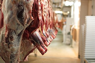 Ethics of eating meat - Cattle carcasses inside of a slaughterhouse.