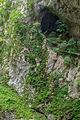 Slovenia DSC 9678 (15375235031).jpg