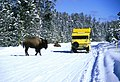 Snow Coach and Bison in Canyon Area (67aa346b-34e0-48c8-bcb2-1a69b4bacd4f).jpg