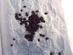 Snowpoop.JPG
