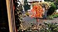 Sorbus Herbstlaub 02.jpg