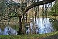 Sous le cèdre bleu pleureur dans l'Arboretum de la Vallée-aux-Loups (Chatenay-Malabry) (25940020667).jpg