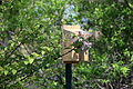 Sparrow nest with tissue 4.jpg