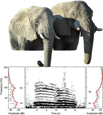 Elefantenjournal datiert