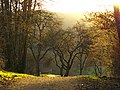 Spring - panoramio (43).jpg
