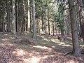 Srní vrch, les.jpg
