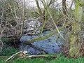 Stagnant Pool near Bobbington, Staffordshire - geograph.org.uk - 378189.jpg