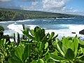 Starr-091104-0727-Scaevola taccada-habit view ocean-Kahanu Gardens NTBG Kaeleku Hana-Maui (24360626243).jpg