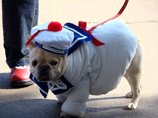 Stay puft french bulldog (2956799679)