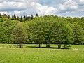 Steigerwald Schulterbachtal 5260006.jpg