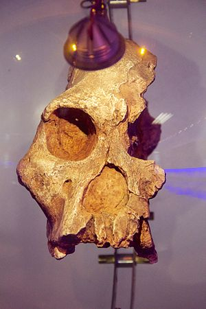 STS 71 - Image: Sterkfontein Caves 4